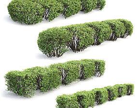 Cotoneaster lucidus hedge Pack 01 3D model