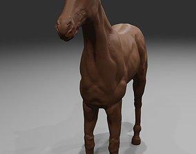 Horse model horse