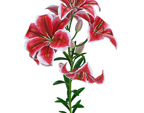 3D Lily pink tiger