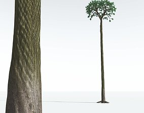 EVERYPlant Spiny Scale Tree 11 --15 Models--