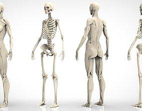 3D Female Ecorche - Digital Model