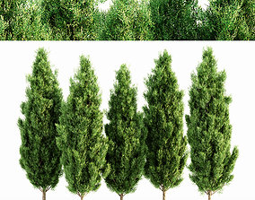 3D model Italian Cypress tree collection 5 trees in the