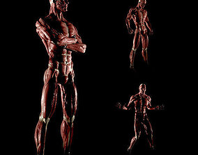 3D model Anatomy of a man