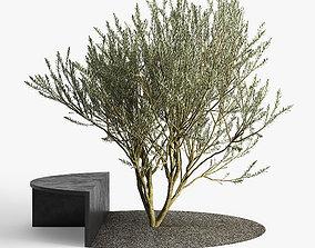 3D RtA Olive