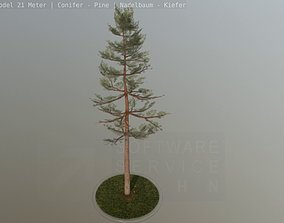 Pine Conifer - Tree 21 Meter 3D asset