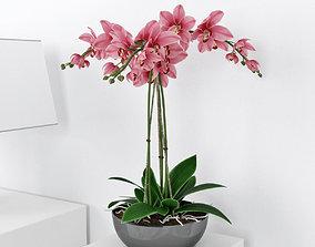 Orchid3 3D