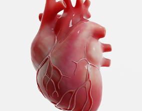 Human Heart human 3D model