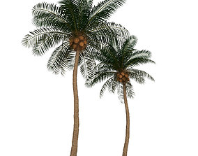 Palm tree 3D model sea