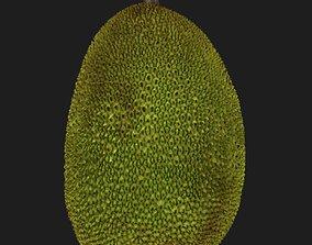 Jackfruit 3D model nature