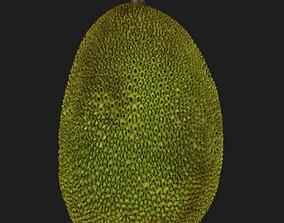 Jackfruit 3D model nature