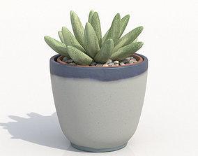 Gasteria Potted Cactus Plant 3D model