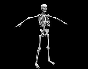 3D model Realistic Human Skeletal System