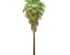 California Palm Tree 3D Model 12m