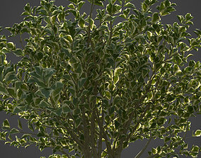 3D model 2021 PBR Spindles Collection - Euonymus