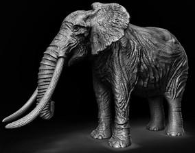 ELEPHANT 3D asset game-ready