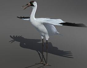 Crane Bird 3D