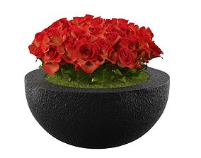 Begonia Floral 3D asset