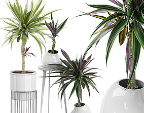 3D model Potted Plants Collection 64