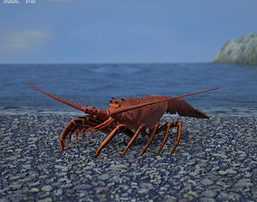 Spiny Lobster Palinuridae 3D asset