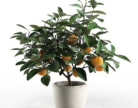 Citrus Tree in Pot 3D
