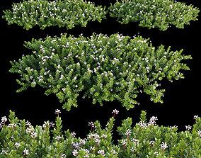3D gardening Arctostaphylos Manzanita Emerald Carpet 02