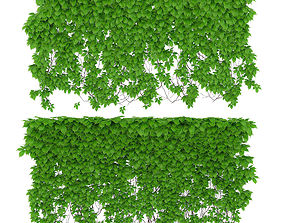 3D model The wall of a parthenocissus 2 items