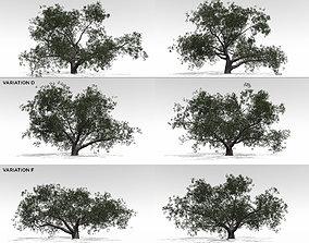 3D model Live Oak Multi-Pack