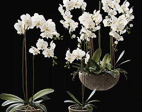 3D model pot Orchid 2