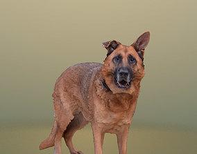 3D model 10470 Pepper - Standing Dog