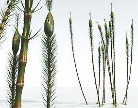 EVERYPlant Suckows Horsetail Tree 05 --16 3D