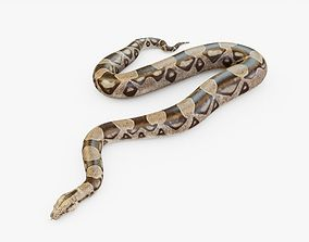 3D model Boa Snake Rigged