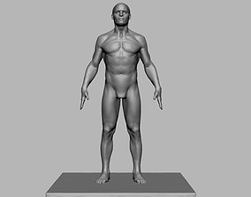 3D printable model Male Anatomy Figure