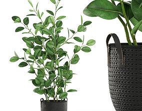 3D model Plants collection 456