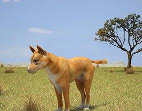 3D asset Dingo Canis Lupus Dingo