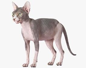 bald 3D Sphynx Cat Bicolor