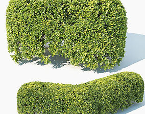 3D Buxus Sempervirens Nr8 oval hedge 50cm