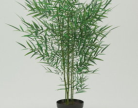 Plant bamboo in black pot 3D