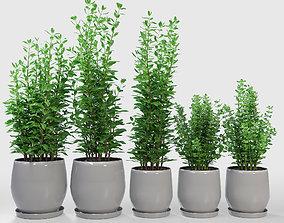 Kitchen Plant Campana Grey Planters 3D