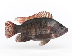 Tilapia Fish 3D model