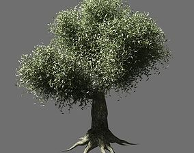 foliage 3D Olive Tree 2