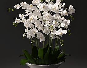 Orchid arrangement 3D model