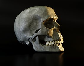 Skull 3D model realtime PBR