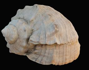 3D asset game-ready Charonia Tritonis Sea Shell