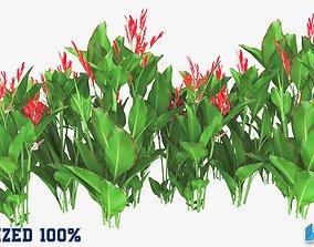 3D asset Canna Indica Plant Optimized
