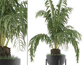 3D House Plant 42