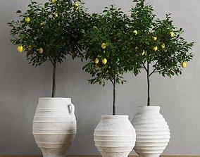 3D model Lemons In Traditional Mediterranean Vases