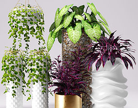 Collection of plants in pots 3D