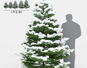 Fir under the snow 3D model