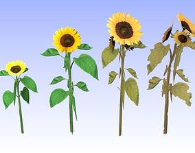 3D asset realtime Sunflowers set lowpoly