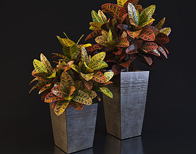 3D model Croton plant 02